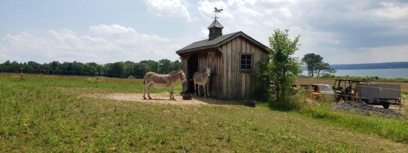 donkeys in house