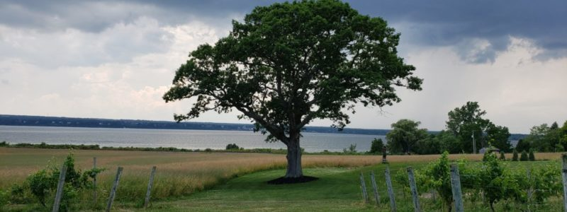 tree with lake in background